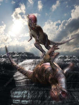 Pachycephalosaurus fighting Stegoceras, illustration