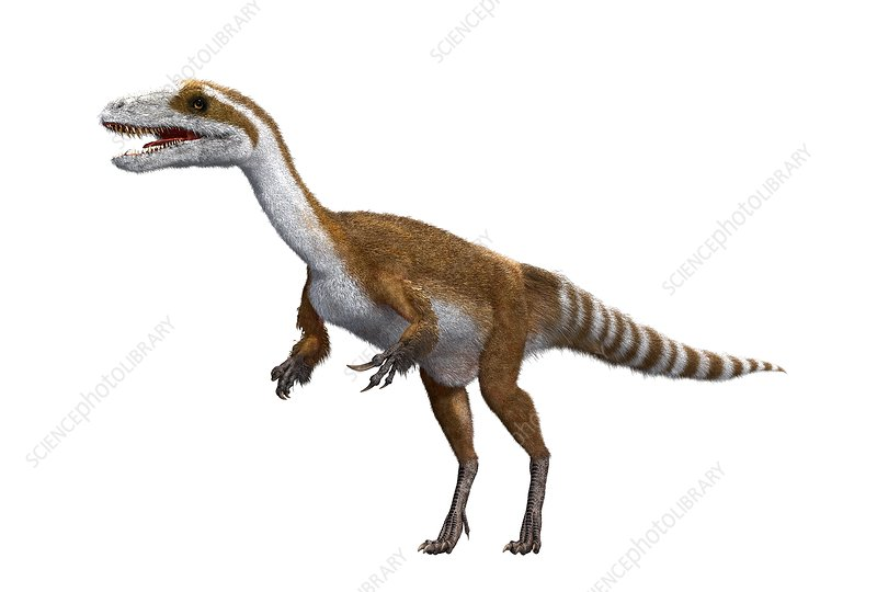 Sinosauropteryx dinosaur, illustration