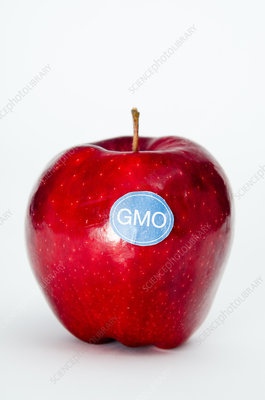 Genetically Modified Produce, Apple