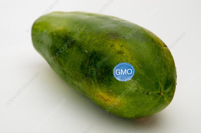 Genetically Modified Produce, Papaya