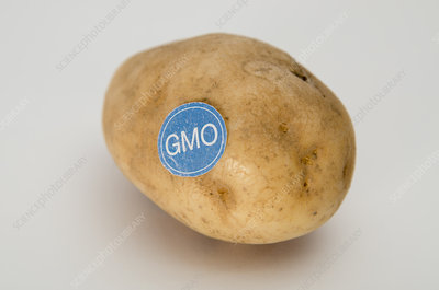 Genetically Modified Produce, Potato