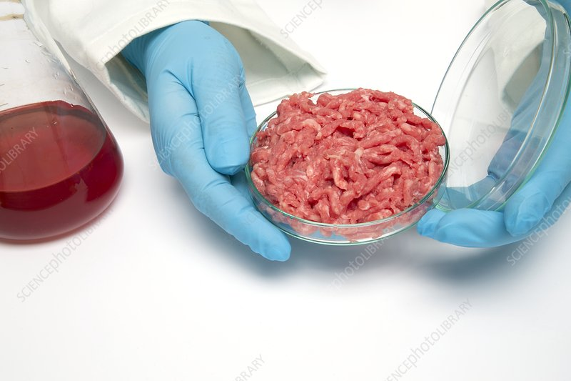 Lab produced meat, conceptual image