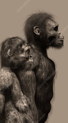 Homo naledi female and male, illustration