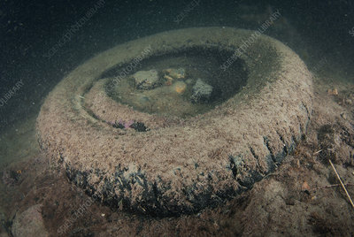 Dumped tyre on the seabed