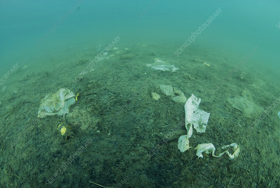 Plastic waste polluting the seabed