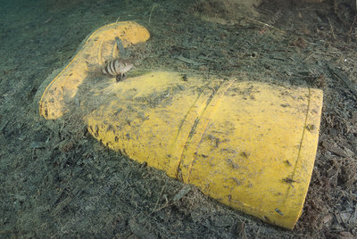 Discarded rubber boot on seabed