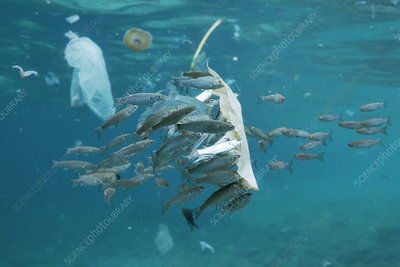 Fish with plastic waste floating in the sea