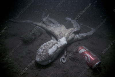 Octopus by discarded drinks can