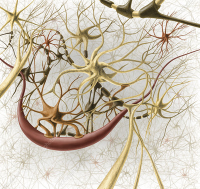 Neurons, illustration