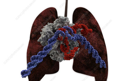 Lung Cancer Treatment, CRISPR-Cas9