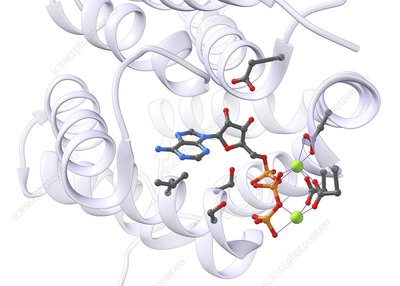 ATP molecule in an enzyme's active site, illustration