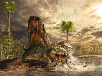 Dimetrodon catching its prey, illustration