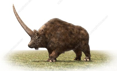 Elasmotherium, illustration