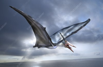 Pterosaur flying reptile, illustration
