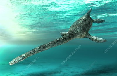 Futabasaurus plesiosaur, illustration