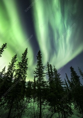 Arctic landscape with trees and Aurora