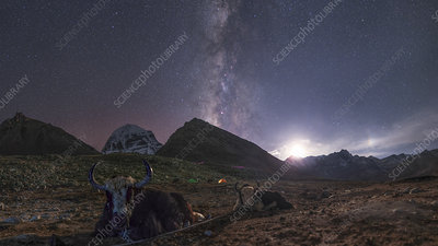 Milky Way and Moon over yaks in Tibet