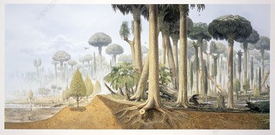 Carboniferous forest, illustration