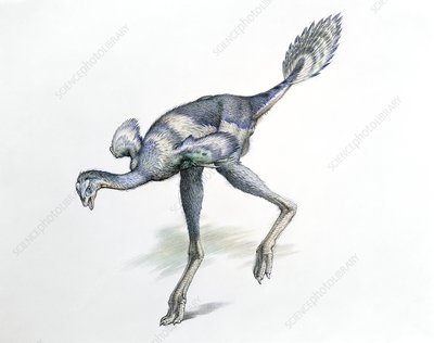 Caudipteryx dinosaur, illustration