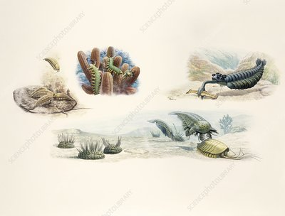 Creatures of the Burgess Shale, illustration