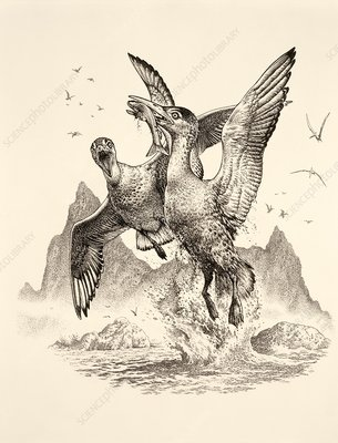 Ichthyornis prehistoric birds, illustration