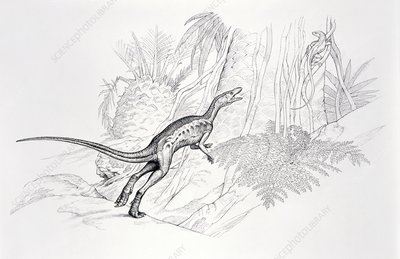 Lagosuchus dinosaur, illustration