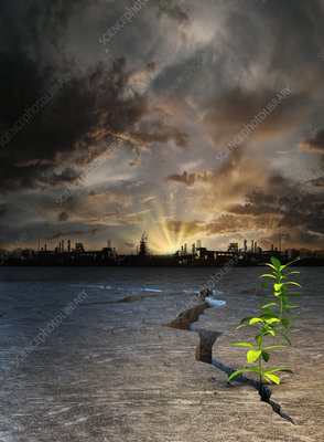 Seedling in barren desert, illustration