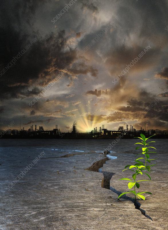 Seedling in barren desert, illustration