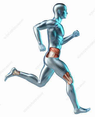Running android with muscles, illustration