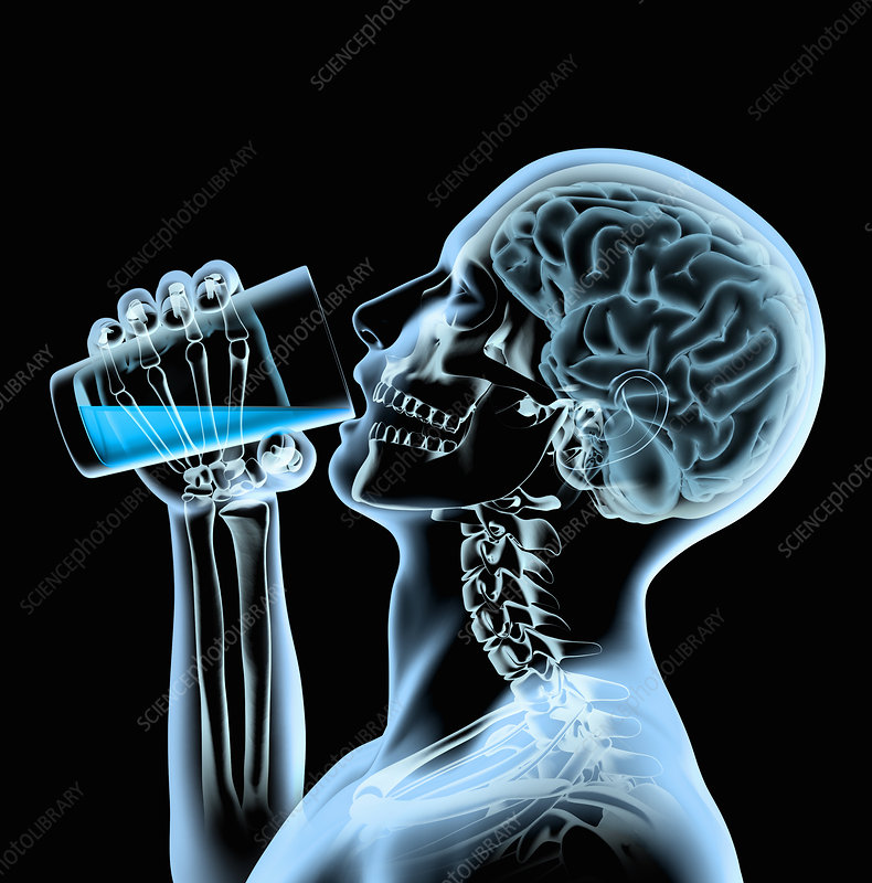 X-ray of man drinking from glass, illustration