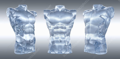 Three anatomical models of male torsos, illustration