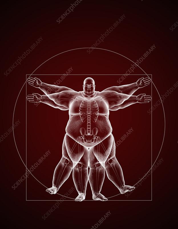 Overweight Vitruvian Man, illustration