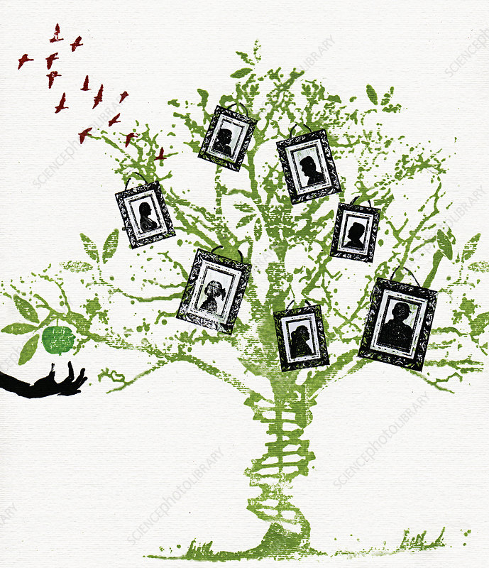 Pictures on family tree, illustration