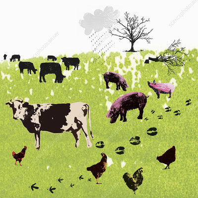 Carbon footprints of farm animals in field, illustration