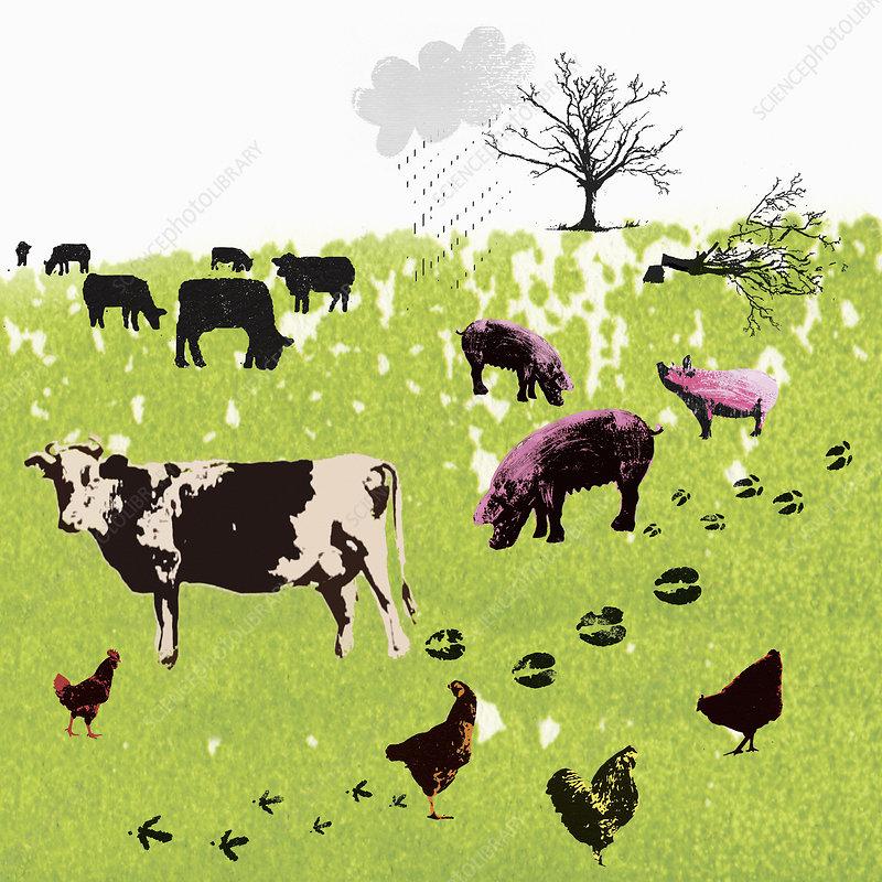 Carbon footprints of farm animals in field, illustration