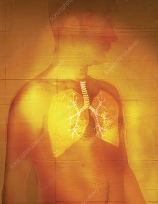 Man with transparent skin displaying lungs, illustration