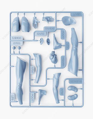 Spare body parts, illustration