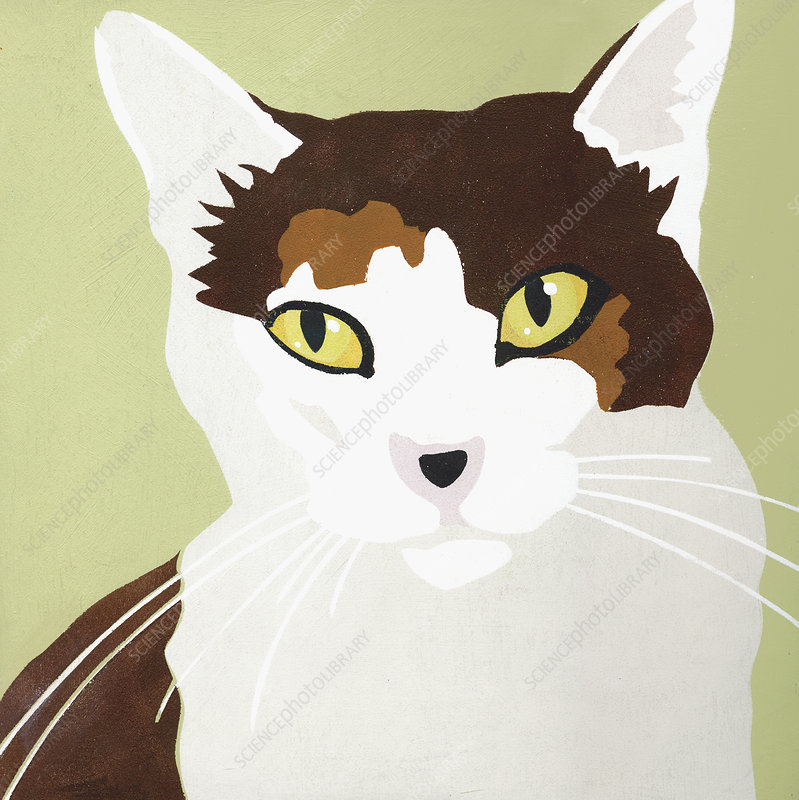 Cat, illustration