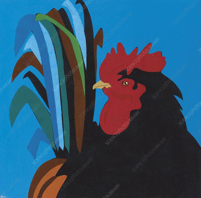 rooster, illustration