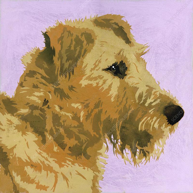 Irish Terrier dog, illustration