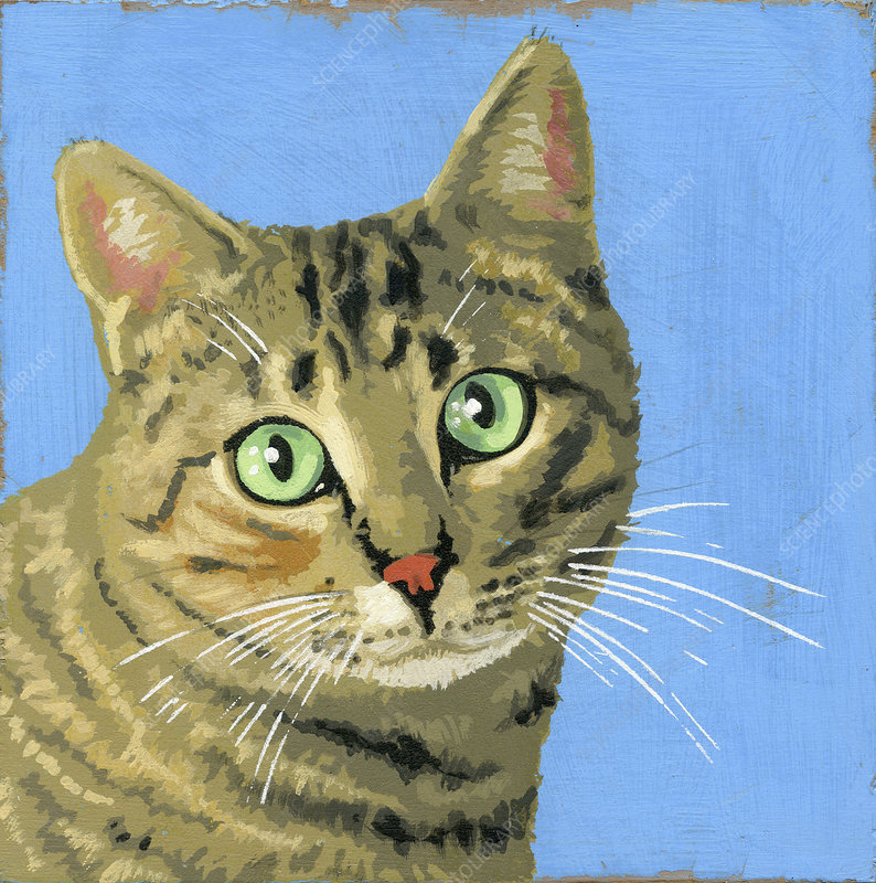 Tabby cat, illustration