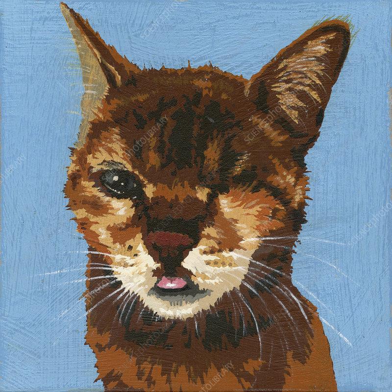 Cat with blind eye, illustration