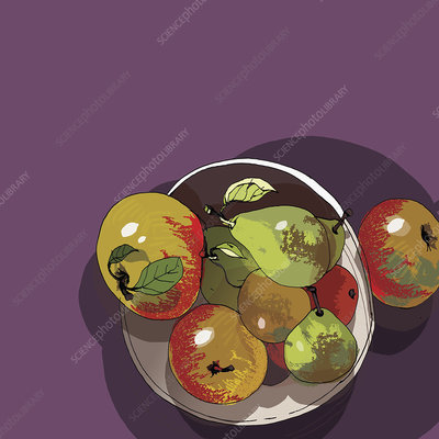 Bowl of apples and pears, illustration