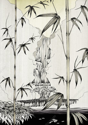 Bamboo growing near waterfall, illustration