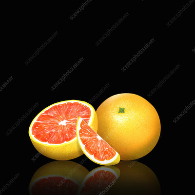 Fresh pink grapefruit, whole, half and slice, illustration