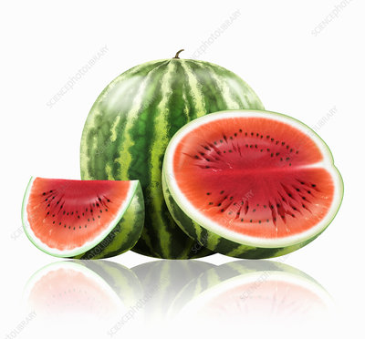 Whole and cut watermelon, illustration