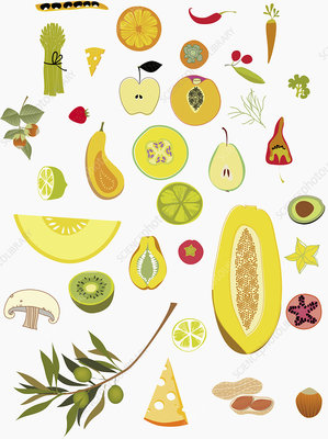 Variety of fruits and vegetables, illustration