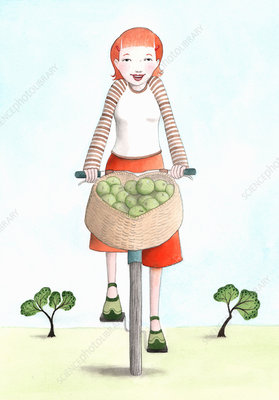 Woman riding bicycle with basket of apples, illustration