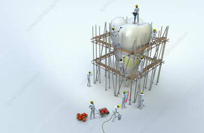 Workmen on scaffolding repairing large tooth, illustration