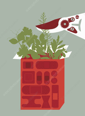 Clippers cutting plants growing in box, illustration